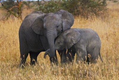 Quadro Irmãos elefante