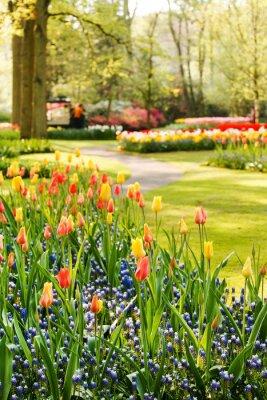 Quadro Jardim da primavera