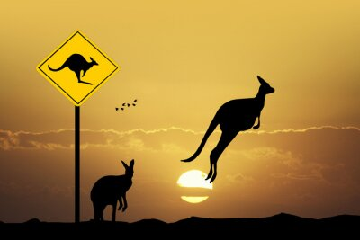 Quadro Kangaroo sinal de cautela