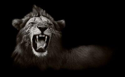 Quadro Leão exibindo dentes perigosas