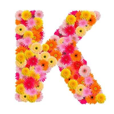 Quadro Letra K alfabeto com gerbera isolado no fundo branco