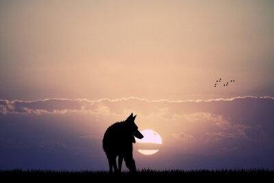Quadro lobo no por do sol