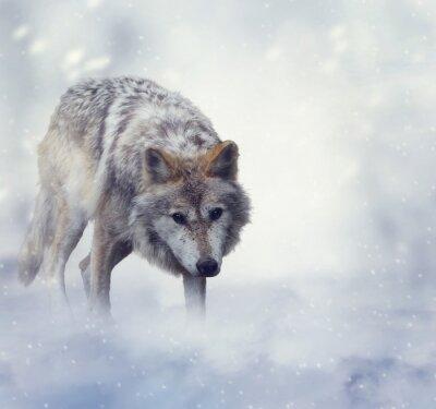 Quadro Lobo no tempo de inverno