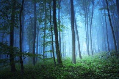 Quadro Luz de cor azul Magic in forrest místico