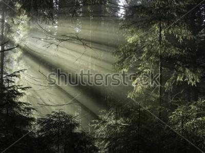 Quadro Luz do sol brilhando através das árvores