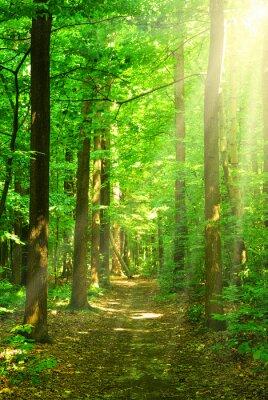 Quadro luz solar floresta