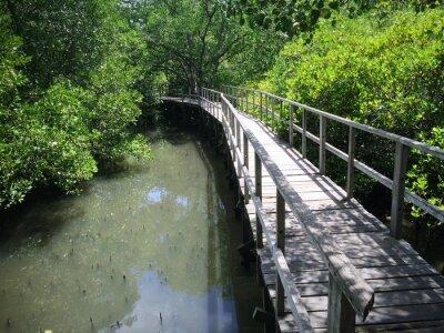 Quadro Madeira, ponte, riverside