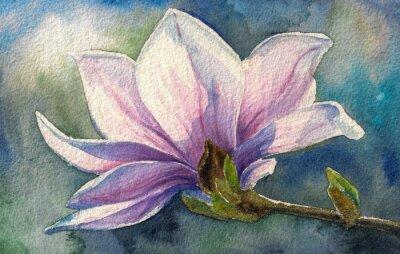Quadro Magnolia flor no branch.Watercolors.