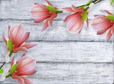 Quadro Magnólia, flores, fundo, gasto, madeira, tábuas