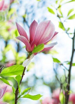 Quadro Magnolia flores no parque