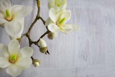 Quadro Magnolia Flower Blossom