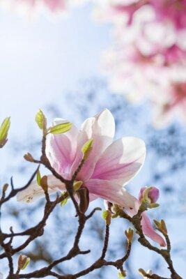 Quadro Magnolienblüte
