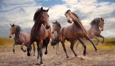 Quadro manada de cavalos