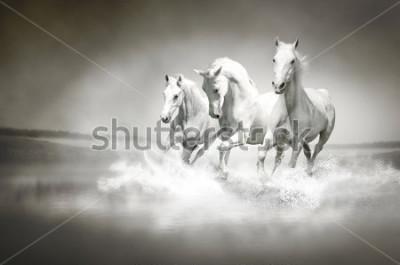 Quadro Manada de cavalos brancos correndo pela água