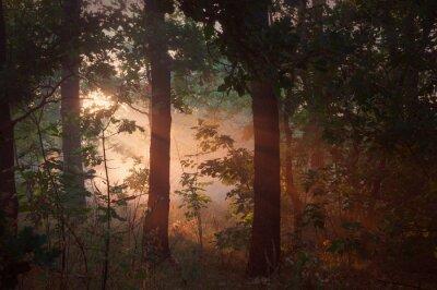 Quadro Manhã, nevoeiro, floresta