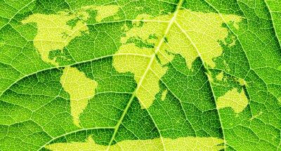 Quadro Mapa do mundo, continentes em fundo verde da folha.