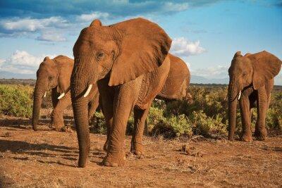 Quadro Matriarcado elefante africano contra um céu azul