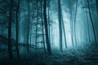 Quadro Místico azul cor floresta nevoenta Dreamy