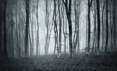 Quadro Monocromático preto e branco grunge textured cor nebuloso místico floresta árvores paisagem.