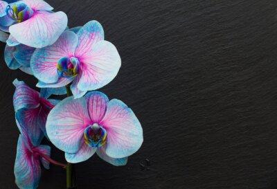 Quadro Monte, violeta, orquídeas