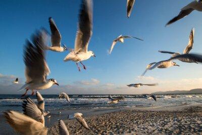 Quadro Möwen im Flug Ostseeküste Binz Alemanha