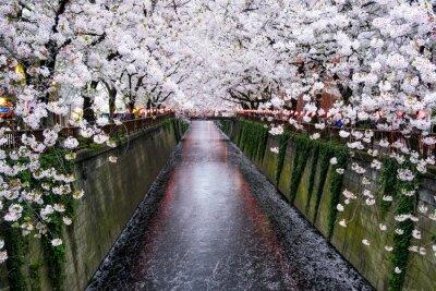 Quadro Nakameguro Kanal em Tokio während der Kirschblüte em Frühling