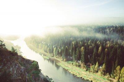 Quadro Névoa grossa da manhã na floresta conífera. Coníferas, matas de floresta verde.
