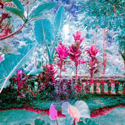 Quadro Núcleos surreais do jardim tropical de fantasia com plantas e flores