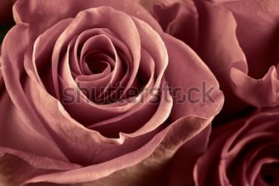 Quadro O grupo do marsala coloriu o close-up cor-de-rosa das flores como o fundo. Foco suave, dof raso. Imagem filtrada.