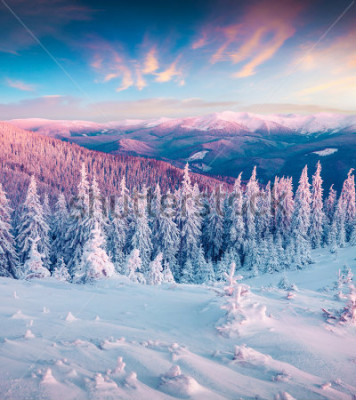 Quadro O nascer do sol fantástico do inverno em montanhas Carpathian with snow recuou trees. Cena exterior colorida, conceito de celebração do novo ano feliz. Poste de estilo artístico foto processada.