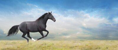 Quadro Olho do cavalo galope em campo