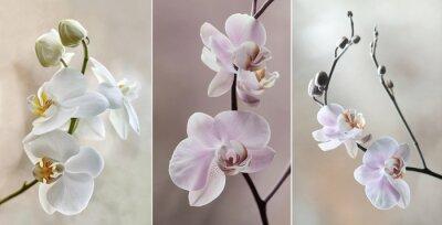 Quadro Orchidea (storczyki) - pastelowe
