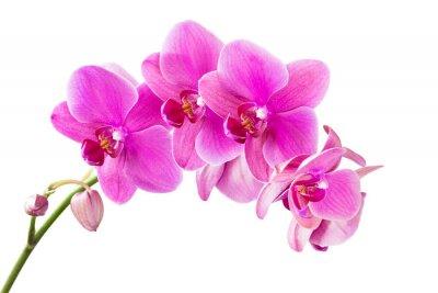 Quadro Orquídea