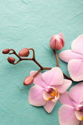 Quadro Orquídea.