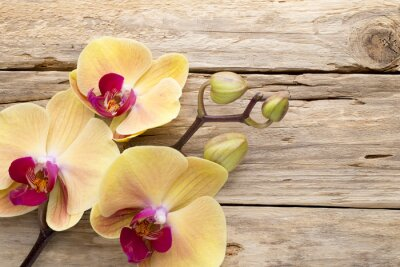 Quadro Orquídea amarela.