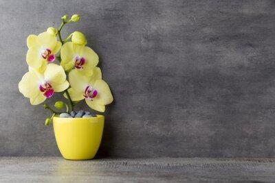 Quadro Orquídea amarela no fundo cinzento.