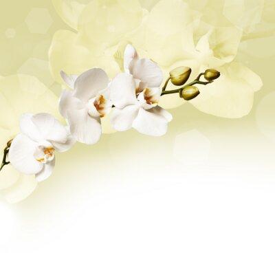 Quadro Orquídea branca bonita