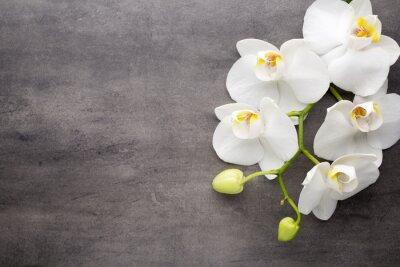 Quadro Orquídea branca no fundo cinzento.