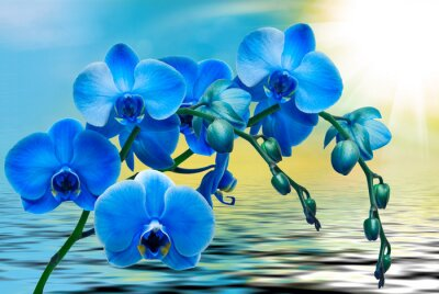 Quadro Orquídea, flor, fim, cima