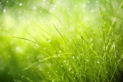 Quadro Orvalho da manhã na grama da mola