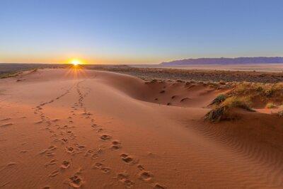 Quadro Oryx tracks to sunset