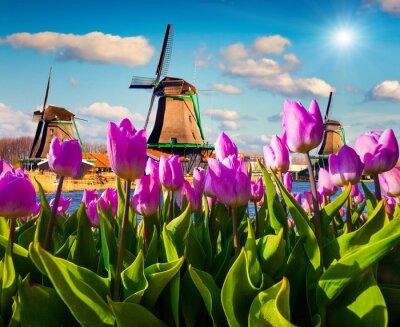 Quadro Os famosos moinhos de vento holandeses