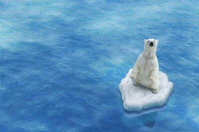 Quadro Ours Blanc / Fonte des glaces