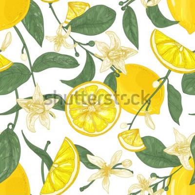 Quadro Padrão sem emenda com limões frescos suculentos, inteiros e cortados em pedaços, flores e folhas no fundo branco. Pano de fundo com frutas cítricas. Ilustração em vetor botânica em estilo antigo para