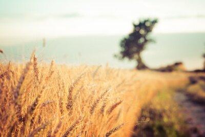 Quadro Paesaggio de campo e campi di grano al tramonto