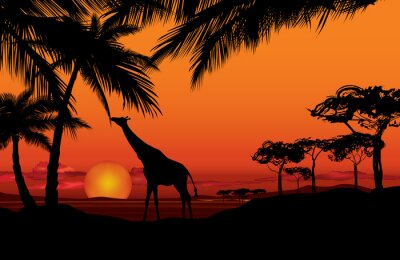 Quadro Paisagem africana com silhueta animal do girafa. Savanna, natureza, pôr do sol, fundo