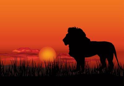 Quadro Paisagem africana com silhueta animal do leão. Savanna fundo pôr do sol