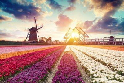 Quadro Paisagem com tulipas, moinhos de vento holandeses tradicionais e casas perto do canal em Zaanse Schans, Holanda, Europa
