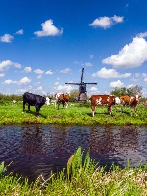 Quadro Paisagem holandesa típica com vacas no prado e um moinho de vento perto da água