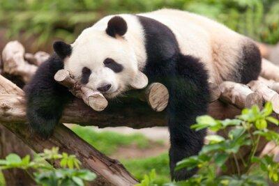 Quadro Panda gigante